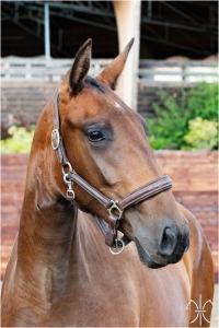 Photo cheval a vendre ORGANZA DE LA GESSE